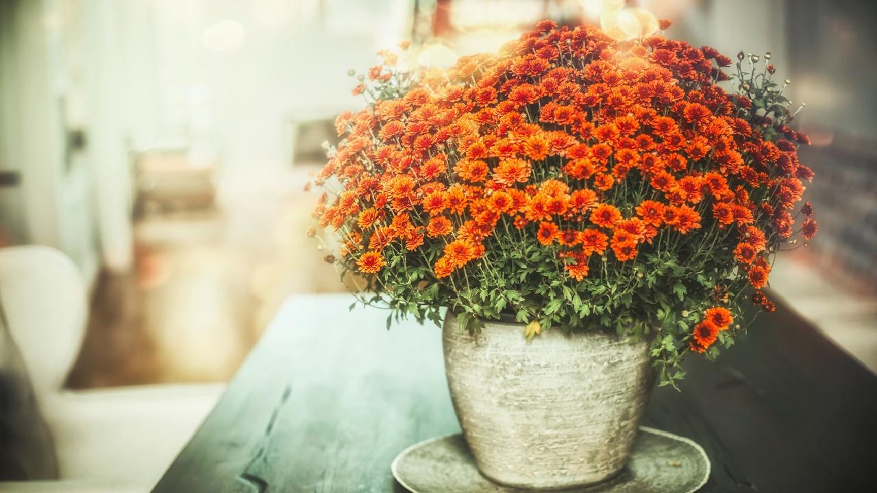 Zehn Pflanzen für ein besseres Raumklima