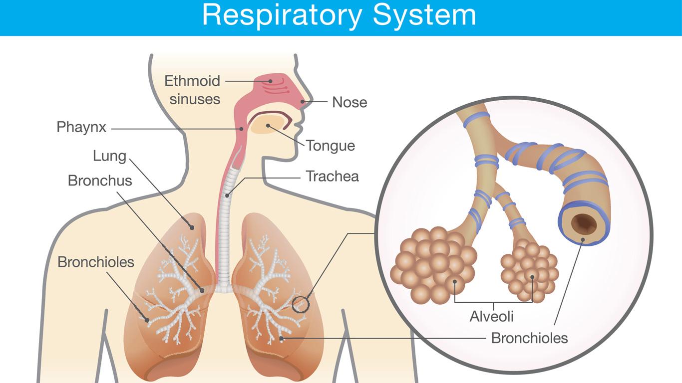 Was passiert bei COPD in der Lunge?