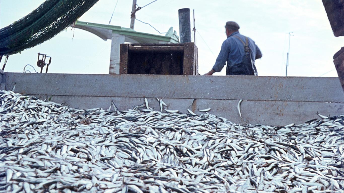 Welche Fischsorten dürfen noch bedenkenlos gegessen werden?