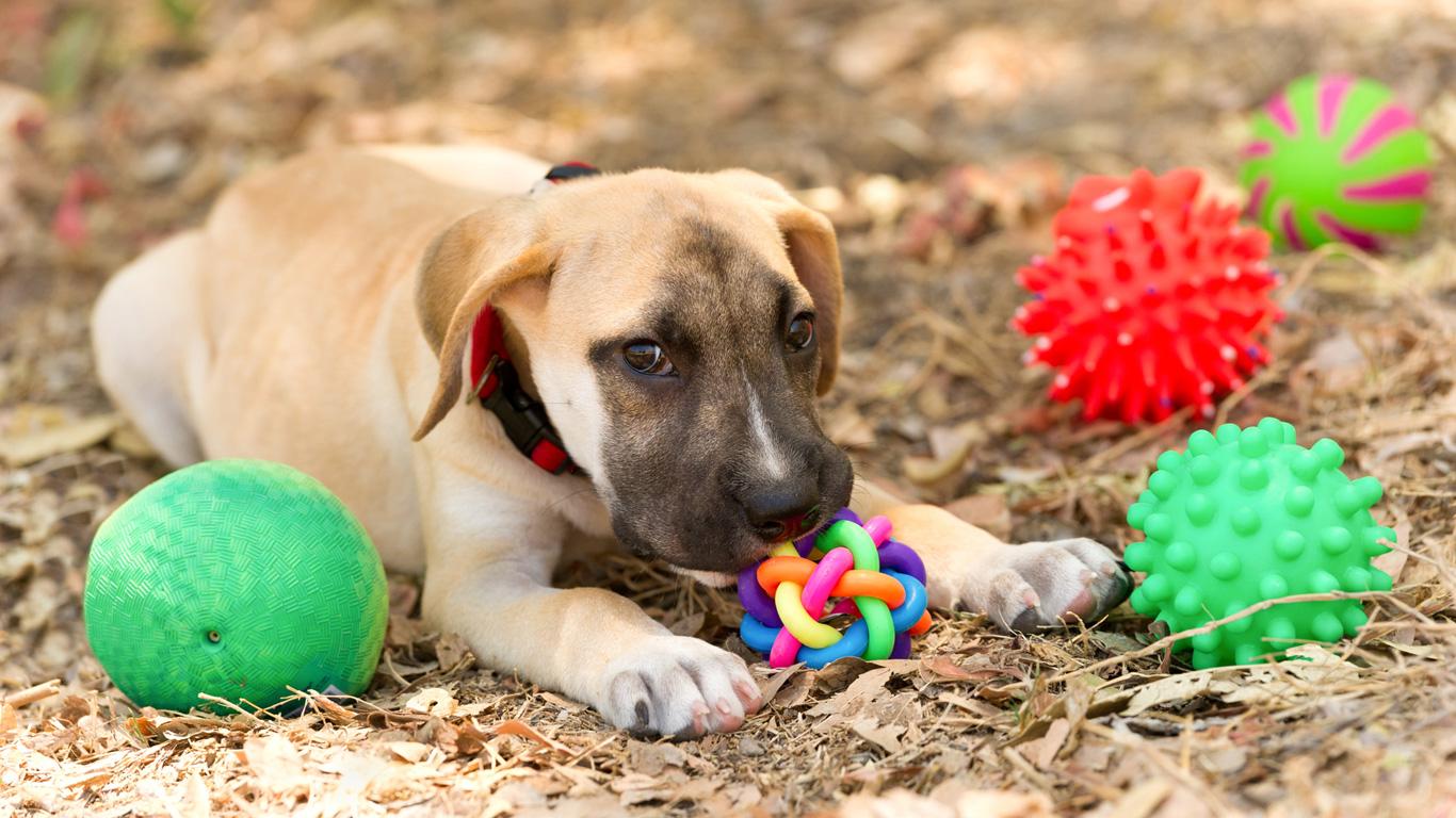Platz 7: Das Haustierspielzeug