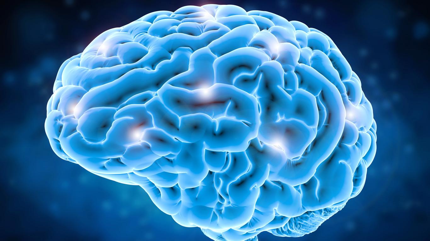 Gehirn und Nerven