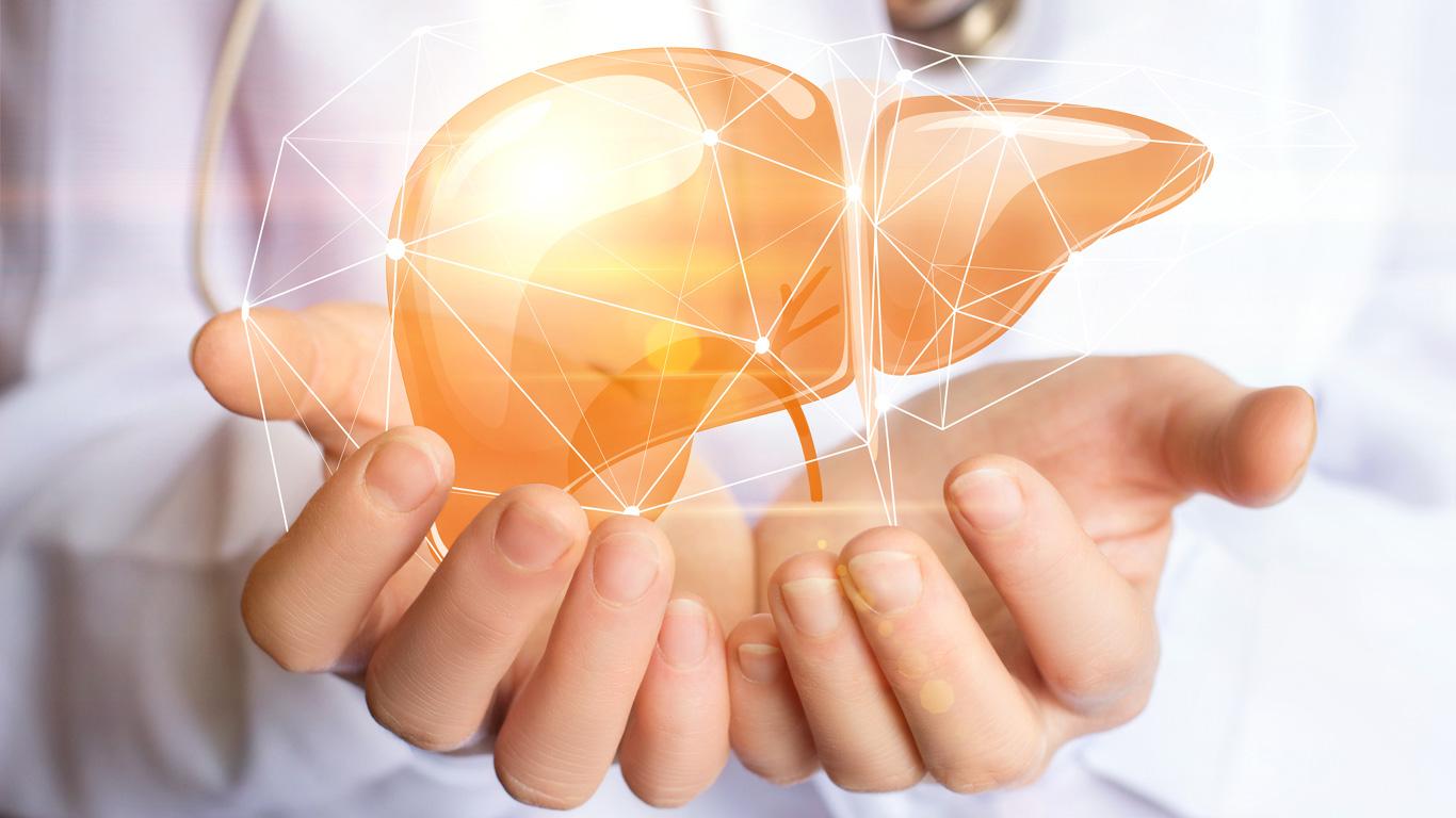 Leberzirrhose und Fettleber: Was der Leber schadet und auf welche Warnsignale man achten sollte