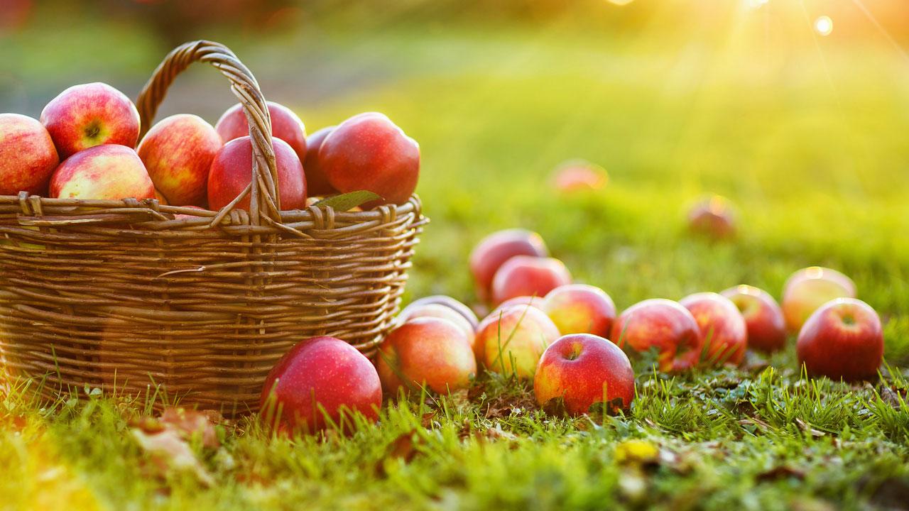 Warum brauchen Äpfel auch nach ihrer Ernte Zeit in der Sonne?